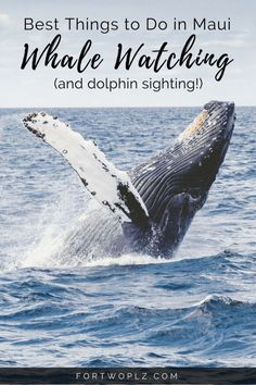 In Maui, make sure you see the Humpback Whales! The whale watching experience is magical. Also, watch out for the Spinner Dolphins!