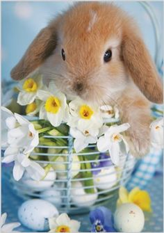 Bunny with daffodils Hoppy Easter, Easter Bunny, Cute Baby Animals, Animals And Pets, Farm Animals, Baby Buns, Indoor Rabbit, Cute Bunny, Pet Birds