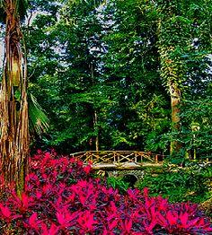 En vacaciones vale la pena volver a visitar el parque de La Flora Exótica, Yaracuy es un estado muy verde. Venezuela