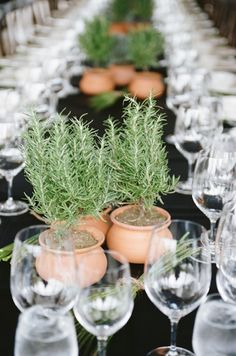 rosemary centerpieces via @Holly Elkins Elkins Elkins Chapple