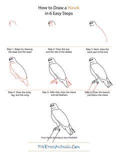 draw simple hawk - Google Search