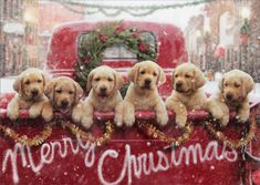 Lab Puppies In Red Truck - Box of 10 Avanti Dog Christmas Cards by Avanti Press #AvantiPress #Christmas