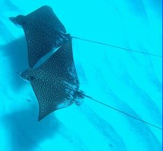 CITES: crucial for conserving sharks and rays