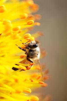 Getting started guide to Macro Photography. This image was shot with an old 70-300mm lens at F4