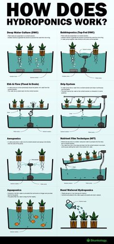 Aquaponics System - How does hydroponics work Break-Through Organic Gardening Secret Grows You Up To 10 Times The Plants, In Half The Time, With Healthier Plants, While the Fish Do All the Work. Aquaponics System, Hydroponic Farming, Hydroponic Growing, Growing Plants, Aquaponics Diy, Indoor Hydroponics, Hydroponics Store, Aquaponics Greenhouse, Indoor Farming
