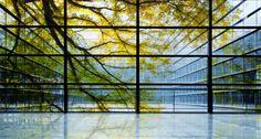 glass wall ACFA blog