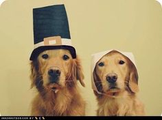 I knew we had the Amish but Amish Dogs? Really?