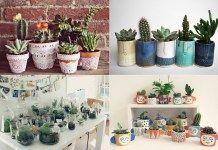 Aprenda a plantar e cultivar plantas suculentas em casa