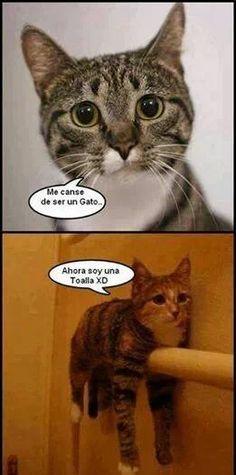 Awww cosa tan hermosa :3 #Gatos #Humor #Espanol