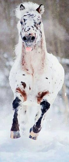 What a joyful face, galloping in the snow!!