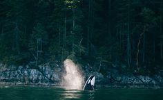 Jeremy Koreski Photography - YELLOWFIN - 1