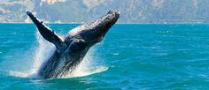 A Whale Watching Adventure Christchurch, Canterbury, New Zealand Book Now and Save - DreamTrips