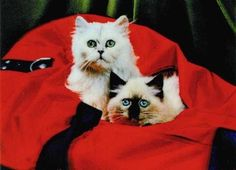 3D Lenticular Cute Cat Postcard Red Sack Kittens from Lantor Ltd., $2.50: After interlacing photos taken from multiple angels, a laminated, composite image can achieve the illusion of 3D with the help of a high-resolution lenticular lens. Here we have neat, cute retro pics of adorable kittens, purrrfect for grandma, collectors, kids, and hip, cat-themed parties! Click here to purchase: http://www.lantorlimited.com/3D-Lenticular-POSTCARD-CatS-I-p/tp-309-pc.htm