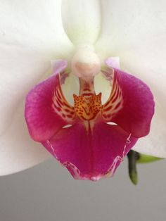 Close to an orchide
