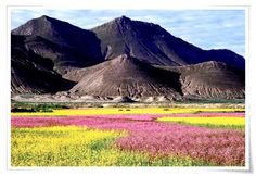 6-day #Lhasa and #Shigatse Budget Tour move westwards to the second biggest city Shigatse, the Area spiritually hosted by Pamchan Lama Passing by the green farmland of Nyangchu Valley, Yamdro-tso lakes, Karo-la glacier roadside at 4960m. http://www.holidaychinatour.com/tour_view.asp?id=100