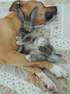 Dogs are awesome and so are bunnies and together they are the uber-awesomest!