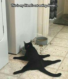 ~Cats~ ~Dinner~