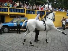 Dancing horse in Nicaragua – The most important holiday in Granada, Nicaragua is the 15th of December, which is the Virgen Maria Inmaculada, or, in English, the celebration of the Immaculation of the Virgin Mary.