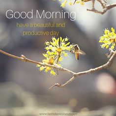 Good Morning. Have a beautiful and productive day.
