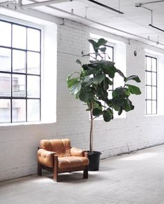 DesignProps | Inspiration | Studio space with leather armchair and fiddle leaf fig plant.