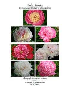 Peonies - Garden Photo Notecards Nature Photography Red Pink White Originals by #NancyJCreates - Set of 7 shimmering handmade cards start at $17.75 - Use #coupon code PIN10 for 10% off now!