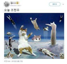 하 진짜 이거 웃겨서 끅끅 웃으면서 캡쳐 졸라 많이 해놓고 블로그에 박제해야지 생각햇느데 또 너무 핫한... Kitty Party, Animals And Pets, Funny Animals, Cute Animals, Giant Cat, Japanese Funny, Comedy Anime, Pets 3, Red Cat