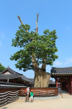 트래블러루앙프라방의 1박2일 경기도 수원여행, 성곽의 꽃 수원화성  【Hwaseong Fortress】, Suwon, Gyeonggi-do, korea.  #여행 #사진 #수원화성 #수원 #트래블러루앙프라방  2014. 06. 06.  #AmateurTravelPhotographer #Travel #Photo #Restaurant #travelerluangprabang #Korea  https://plus.google.com/+트래블러루앙프라방  http://instagram.com/travelerluangprabang  http://m.blog.naver.com/1997ssy  http://www.tnote.kr/ssy1997