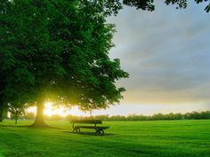 Free Sunrise On A Green Field, computer desktop wallpapers, pictures, images