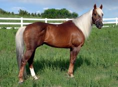 grulla2-equine.jpg Photo:  This Photo was uploaded by DaisyKJ.