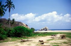 Photo of Horses on the Beach in Maruata, Mexico #LoveSobeys