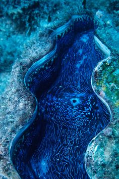 Giant Clam: The Ocean's Magnum Opus - via Bates Littlehales/National Geographic Stock