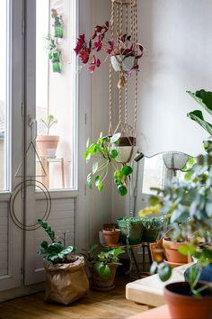 Como deixar a casa mais aconchegante com plantas