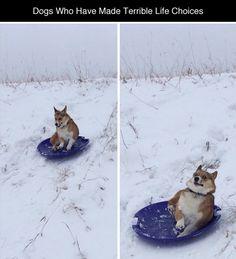 未来 わ。。。かれるんだ!!: tastefullyoffensive:   Dogs Who've Made Terrible...