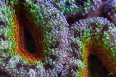 Amazing macro photos of corals from the Great Barrier Reef (20 photos) | Kenga Rex | Page 18