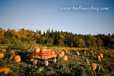 http://www.truthmastery.com | Life Coaching with Robert Kintigh at Truth Mastery #TruthMastery #RobertKintigh #coaching #life_Coach #business_training #Autumn #pumpkin #life #harvest