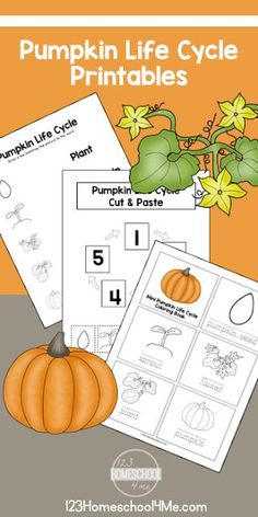 Free Life Cycle of a Pumpkin Printables - kids can learn about pumpkin life cycle vocabulary practice sequencing and more with these free printables for preschool kindergarten first grade grade Fall Preschool Activities, Kindergarten Science, Preschool Printables, Sequencing Activities, Elementary Science, Halloween Activities, Pumpkin Life Cycle, Pumpkin Printable, Cycle 2
