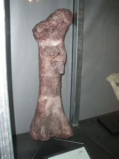 Isanosaurus was one of the first sauropod dinosaurs. It lived approximately 210 million years ago during the Upper Triassic (late Norian to Rhaetian stages) in Thailand. The only species is Isanosaurus attavipachi. Prom Dresses, Formal Dresses, Fossils, Thighs, Extinct, Creatures 3, Evolution, Thailand, Relationships