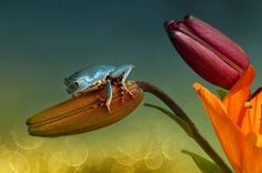 Le rane colorate di Wil Mijer