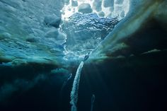 Under the Ice . by Paul Nicklen, National Geographic