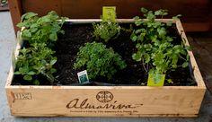 Box herb garden
