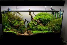 New Junglescape by nicpapa | Blue Aquarium