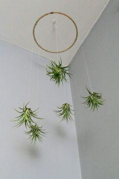 décoration suspendue avec des plantes Tillandsias