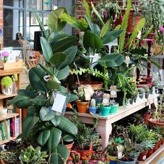 The Greenhouse @ Emmaus is jam packed full of beautiful plants ready for today's Spring Fair. Join us from Spring Fair, Brighton And Hove, Greenhouse Gardening, Garden Shop, Garden Inspiration, Join, Plants, Beautiful, Flora