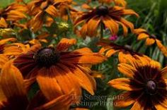 Tim Stinger posted a photo:  http://ift.tt/298jo8E - http://ift.tt/g8FRpY