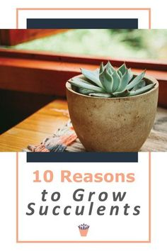 What is so interesting about Xeriscaping and growing succulents? You might have different reasons to grow them. Maybe you only have a small area to garden, and want to grow plants in pots. Succulents excel at staying healthy, even without a lot of soil. Here are ten reasons why I'll always grow these fascinating plants in my garden. #Xeriscaping #growingsucculents #succulents Growing Succulents, Succulents Garden, Growing Plants, Xeriscaping, Drought Tolerant Plants, Potted Plants, How To Stay Healthy, Planter Pots, Gardens
