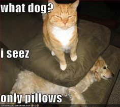 Funny Cat Pictures With Captions | Saturday Morning Animal Laughs Via Google | What about God?