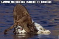Moon Moon wants to ice dance...