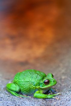 """https://flic.kr/p/8T8XxF 