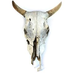 Cow Skull, discount 38% - not for everyone ;)