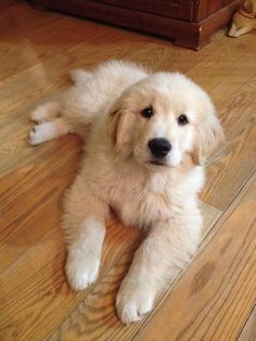 adorable! looks just like our Morgan when he was a puppy!
